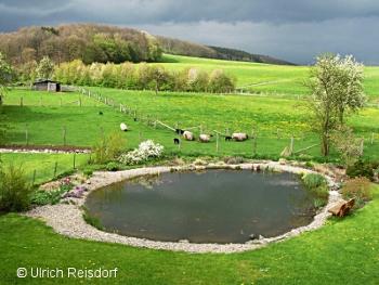 Aquarien und terrarienfreunde seerose frechen e v der for Bruchsteine teich