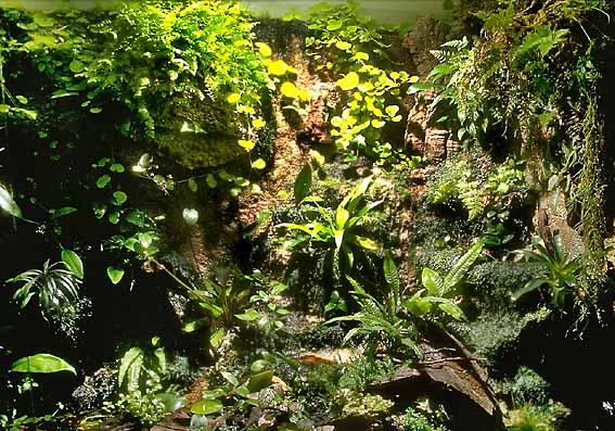 aquarien und terrarienfreunde seerose frechen e v aufbau eines regenwaldterrariums. Black Bedroom Furniture Sets. Home Design Ideas